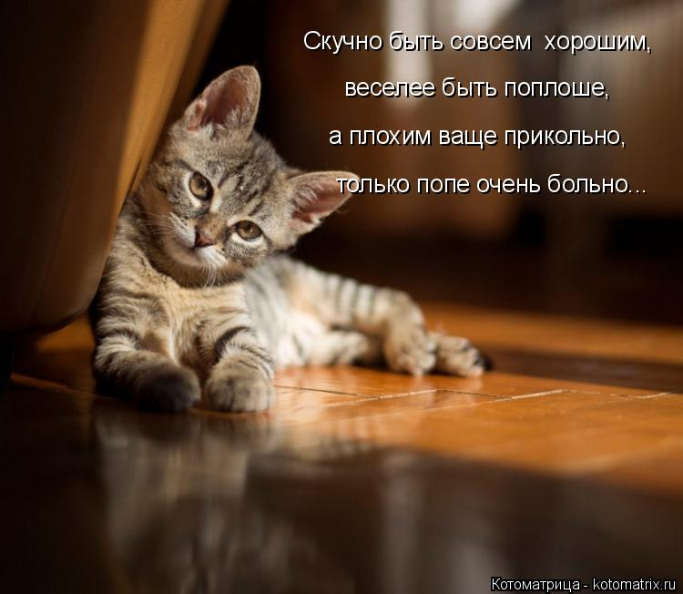 Котоматрица: только попе очень больно... Скучно быть совсем  хорошим,  веселее быть поплоше,  а плохим ваще прикольно,