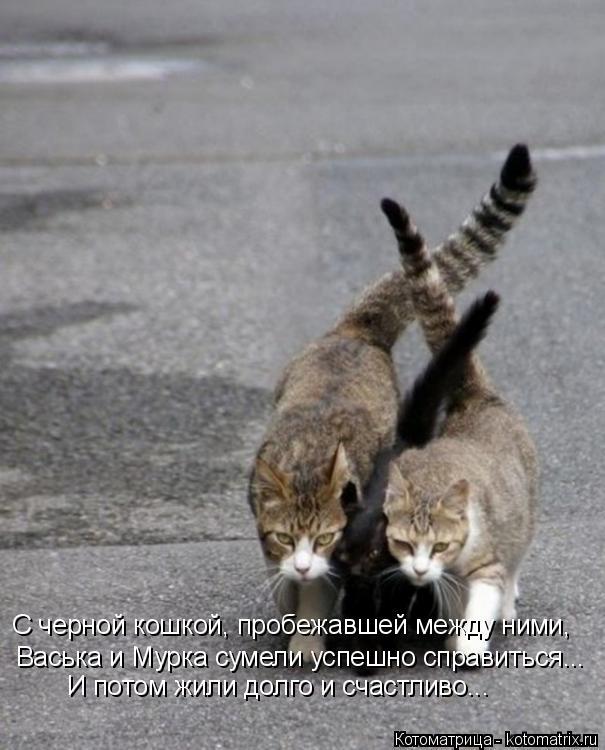 Котоматрица: С черной кошкой, пробежавшей между ними, Васька и Мурка сумели успешно справиться... И потом жили долго и счастливо...