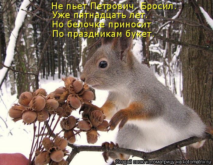 Котоматрица: Не пьет Петрович. Бросил. Уже пятнадцать лет. Но белочке приносит  По праздникам букет.