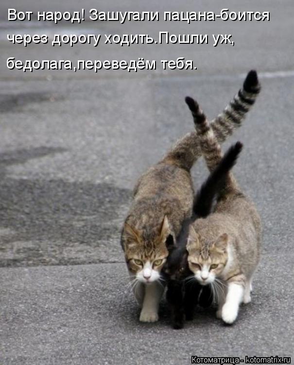 Котоматрица: Вот народ! Зашугали пацана-боится через дорогу ходить.Пошли уж, бедолага,переведём тебя.