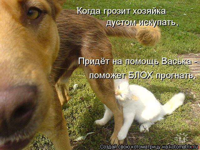 Котоматрица: Когда грозит хозяйка дустом искупать, Придёт на помощь Васька -  поможет БЛОХ прогнать.