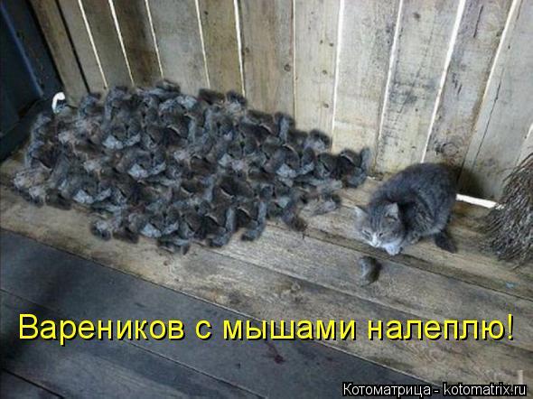 Котоматрица: Вареников с мышами налеплю!