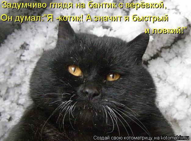 "Котоматрица: Задумчиво глядя на бантик с верёвкой, Он думал:""Я -котик! А значит я быстрый  и ловкий!"""