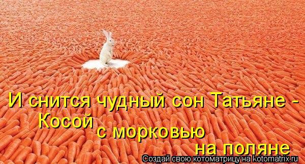 Котоматрица: И снится чудный сон Татьяне - Косой с морковью на поляне