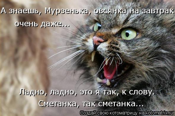 Котоматрица: А знаешь, Мурзенька, овсянка на завтрак очень даже... Ладно, ладно, это я так, к слову. Сметанка, так сметанка...