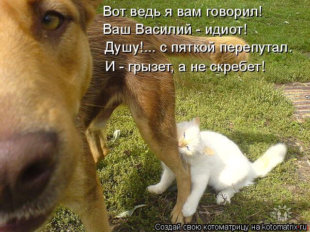 Котоматрица: Вот ведь я вам говорил! Ваш Василий - идиот! Душу!... с пяткой перепутал. И - грызет, а не скребет!