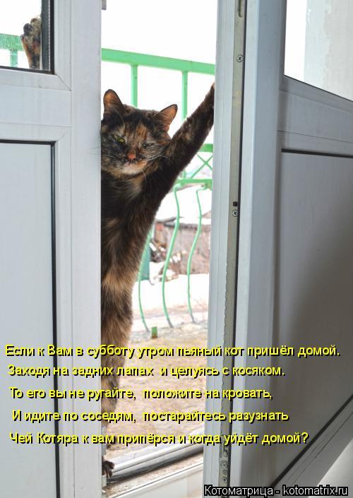 Котоматрица: Если к Вам в субботу утром пьяный кот пришёл домой.  Заходя на задних лапах  и целуясь с косяком. То его вы не ругайте,  положите на кровать,  И