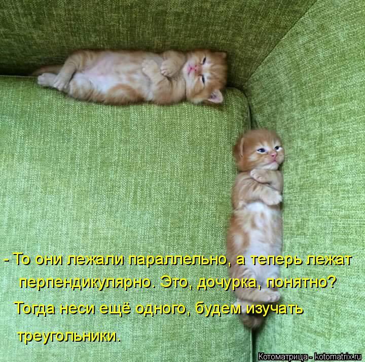 Котоматрица: - То они лежали параллельно, а теперь лежат  перпендикулярно. Это, дочурка, понятно?  Тогда неси ещё одного, будем изучать треугольники.