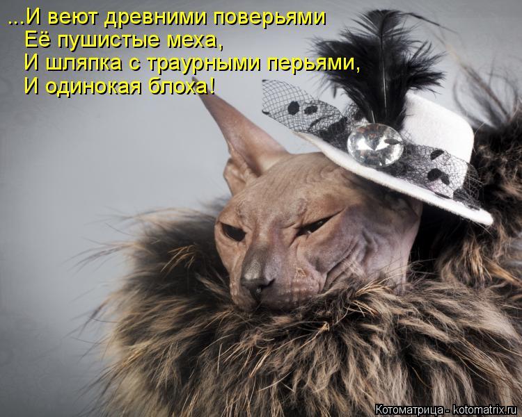 Котоматрица: ...И веют древними поверьями Её пушистые меха, И шляпка с траурными перьями, И одинокая блоха!