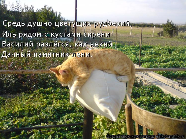 Котоматрица: Иль рядом с кустами сирени Василий разлёгся, как некий Дачный памятник лени. Средь душно цветущих рудбекий,