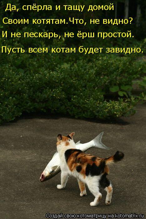 Котоматрица: Да, спёрла и тащу домой Пусть всем котам будет завидно. Своим котятам.Что, не видно? И не пескарь, не ёрш простой.