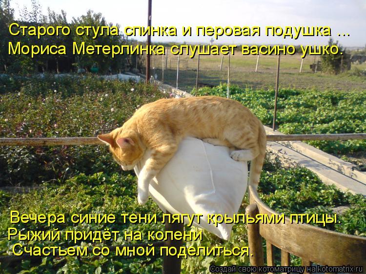 Котоматрица: Старого стула спинка и перовая подушка ... Мориса Метерлинка слушает васино ушко. Вечера синие тени лягут крыльями птицы. Рыжий придёт на ко?