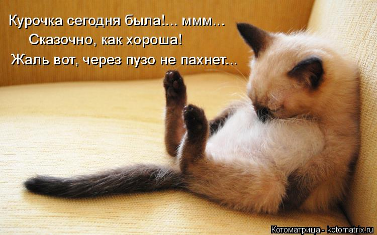 Котоматрица: Курочка сегодня была!... ммм... Сказочно, как хороша! Жаль вот, через пузо не пахнет...
