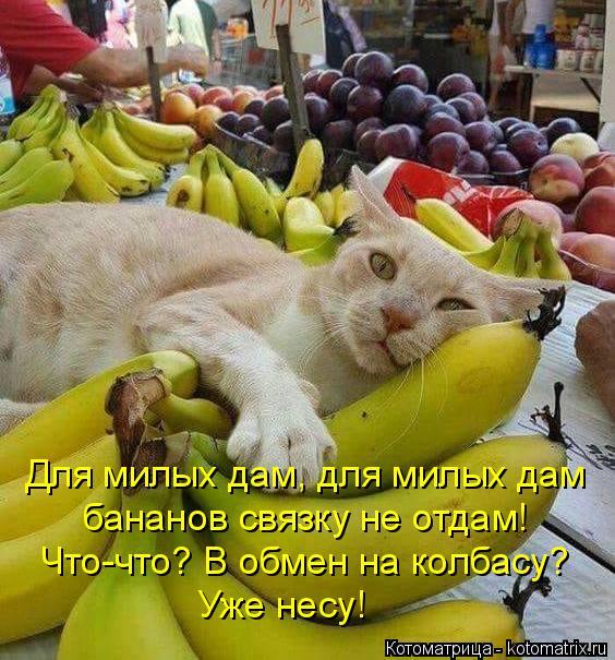 Котоматрица: Для милых дам, для милых дам бананов связку не отдам! Что-что? В обмен на колбасу? Уже несу!