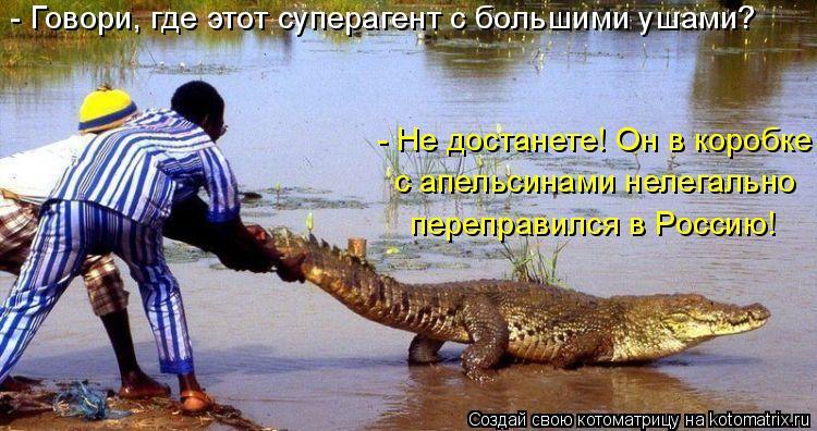 Котоматрица: - Говори, где этот суперагент с большими ушами? - Не достанете! Он в коробке  с апельсинами нелегально  переправился в Россию!