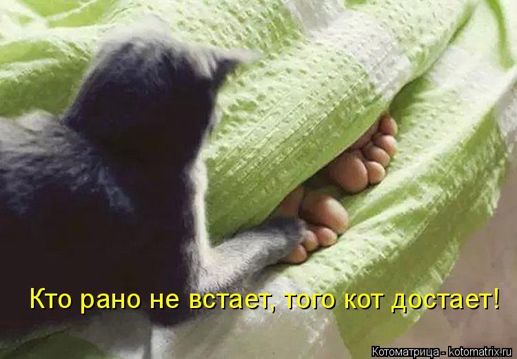 Котоматрица: Кто рано не встает, того кот достает!