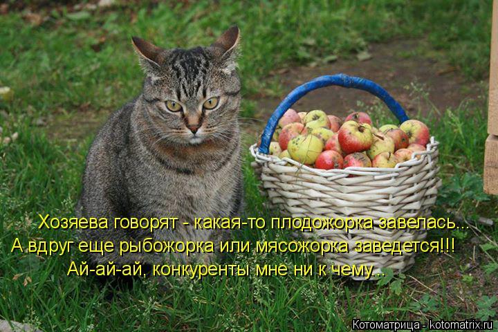 Котоматрица: Хозяева говорят - какая-то плодожорка завелась... А вдруг еще рыбожорка или мясожорка заведется!!! Ай-ай-ай, конкуренты мне ни к чему...