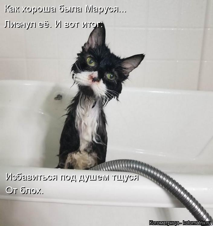 Котоматрица: Как хороша была Маруся... Лизнул её. И вот итог: Избавиться под душем тщуся  От блох.