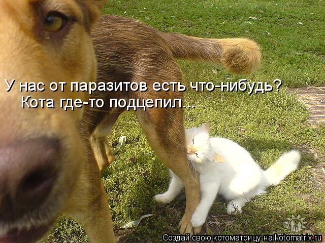 Котоматрица: У нас от паразитов есть что-нибудь? Кота где-то подцепил...