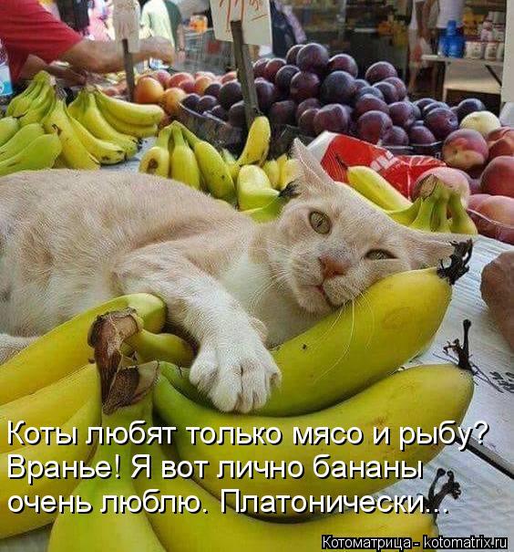Котоматрица: Коты любят только мясо и рыбу?  Вранье! Я вот лично бананы  очень люблю. Платонически...