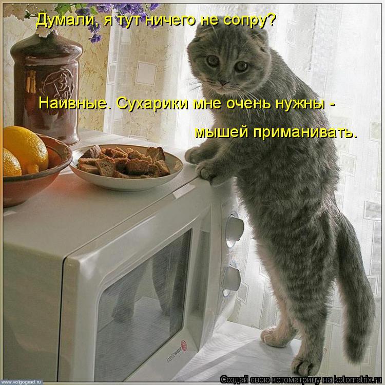 Котоматрица: Думали, я тут ничего не сопру? Наивные. Сухарики мне очень нужны - мышей приманивать.