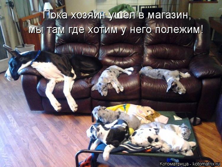 Котоматрица: Пока хозяин ушел в магазин, мы там где хотим у него полежим!