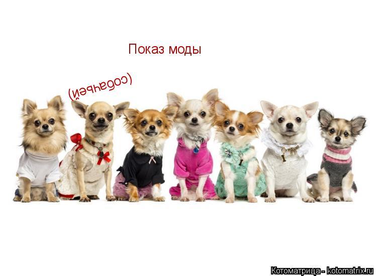 Котоматрица: Показ моды (собачьей)