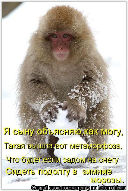 Котоматрица: Я сыну объясняю,как могу, Такая вышла вот метаморфоза, Что будет,если задом на снегу Сидеть подолгу в  зимние  морозы.