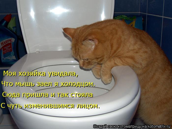 Котоматрица: Моя хозяйка увидала, Что мышь заел я холодцом. Сюда пришла и так стояла С чуть изменившимся лицом.
