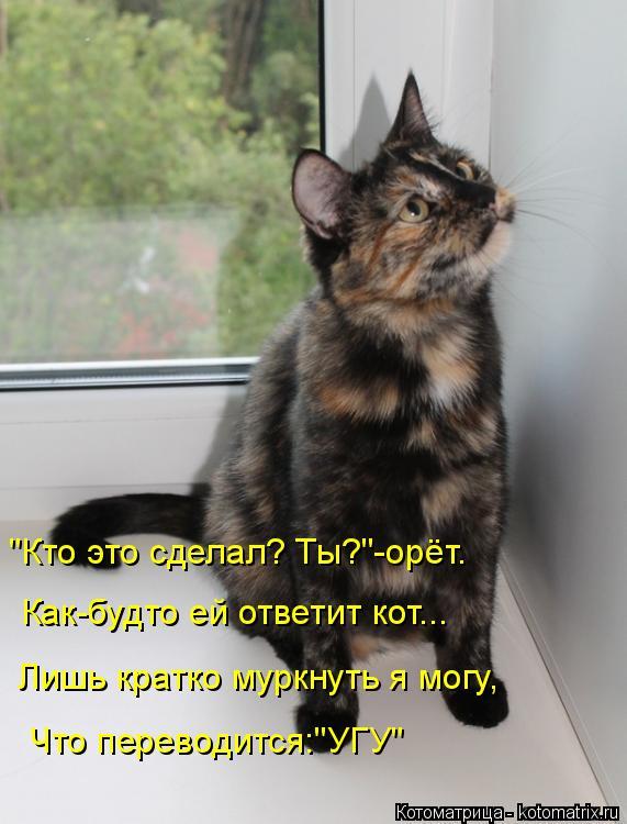 """Котоматрица: """"Кто это сделал? Ты?""""-орёт. Как-будто ей ответит кот... Лишь кратко муркнуть я могу, Что переводится:""""УГУ"""""""