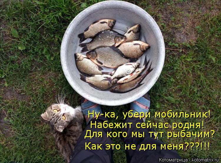 Котоматрица: Ну-ка, убери мобильник! Набежит сейчас родня! Для кого мы тут рыбачим? Как это не для меня???!!!