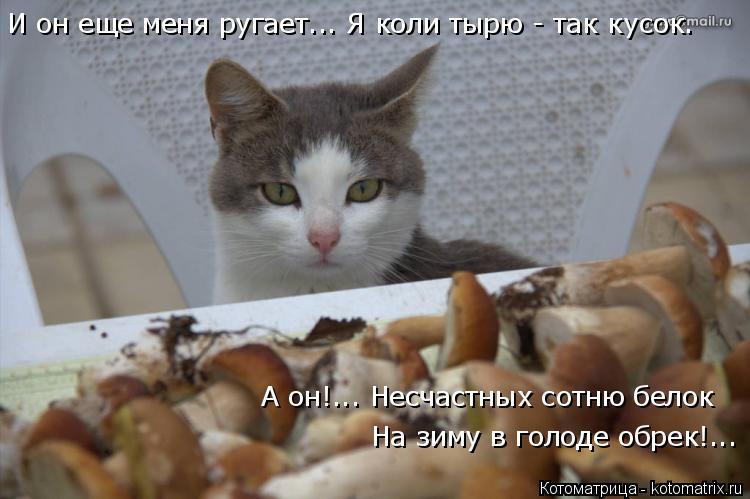 Котоматрица: И он еще меня ругает... Я коли тырю - так кусок. А он!... Несчастных сотню белок На зиму в голоде обрек!...