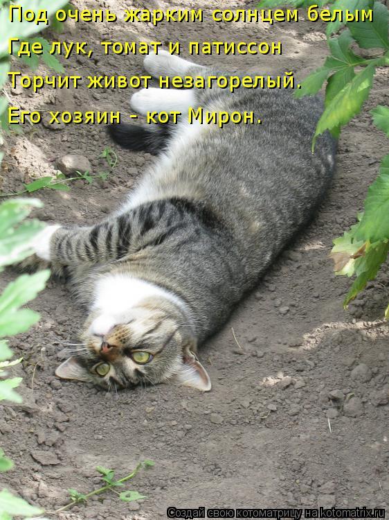 Котоматрица: Под очень жарким солнцем белым Где лук, томат и патиссон Торчит живот незагорелый. Его хозяин - кот Мирон.