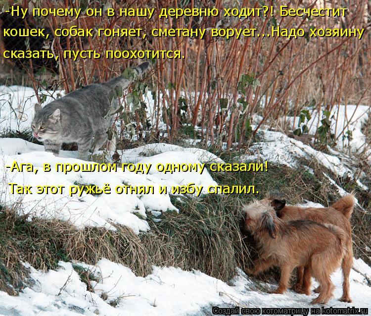 Котоматрица: -Ну почему он в нашу деревню ходит?! Бесчестит  кошек, собак гоняет, сметану ворует...Надо хозяину сказать, пусть поохотится. -Ага, в прошлом го