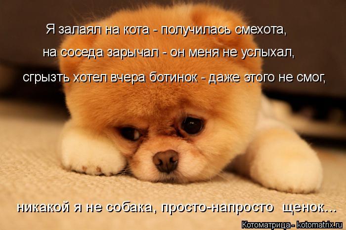 Котоматрица: на соседа зарычал - он меня не услыхал, сгрызть хотел вчера ботинок - даже этого не смог, никакой я не собака, просто-напросто  щенок... Я залая?