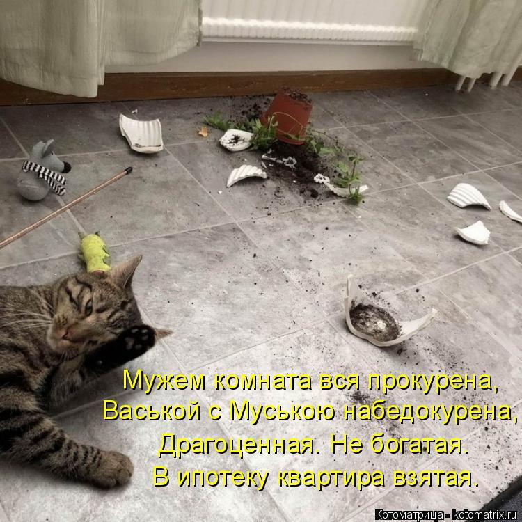 Котоматрица: Мужем комната вся прокурена, Васькой с Муською набедокурена, Драгоценная. Не богатая. В ипотеку квартира взятая.