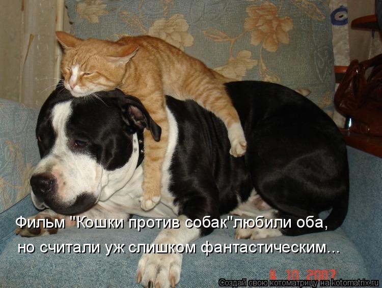 "Котоматрица: Фильм ""Кошки против собак""любили оба, но считали уж слишком фантастическим..."