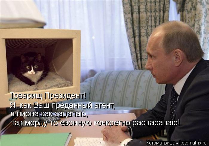 Котоматрица: Товарищ Президент!  Я, как Ваш преданный агент, шпиона как зацапаю, так морду-то евонную конкретно расцарапаю!