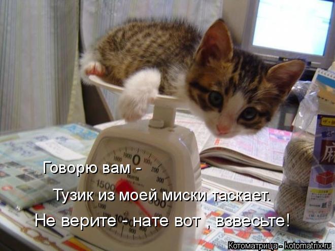 Котоматрица: Говорю вам -  Не верите - нате вот , взвесьте! Тузик из моей миски таскает.