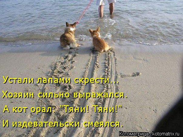 """Котоматрица: И издевательски смеялся. А кот орал: """"Тяни! Тяни!"""" Хозяин сильно выражался. Устали лапами скрести..."""