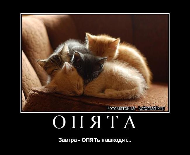 Котоматрица: ОПЯТА Завтра - ОПЯТь нашкодят...