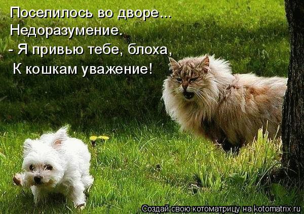 Котоматрица: Поселилось во дворе... Недоразумение. - Я привью тебе, блоха,  К кошкам уважение!