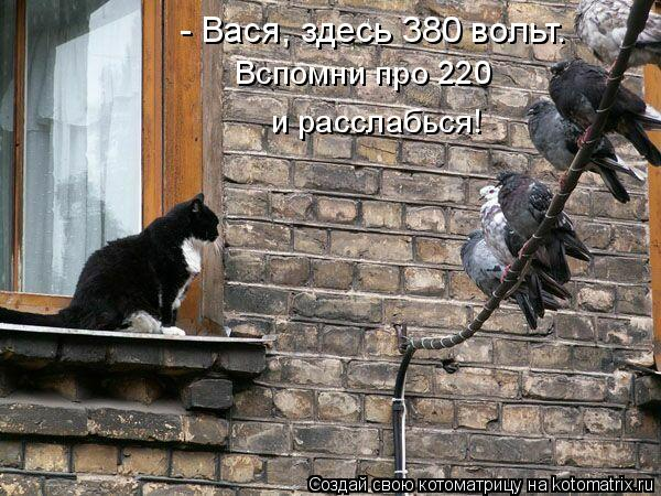 Котоматрица: - Вася, здесь 380 вольт. Вспомни про 220 и расслабься!