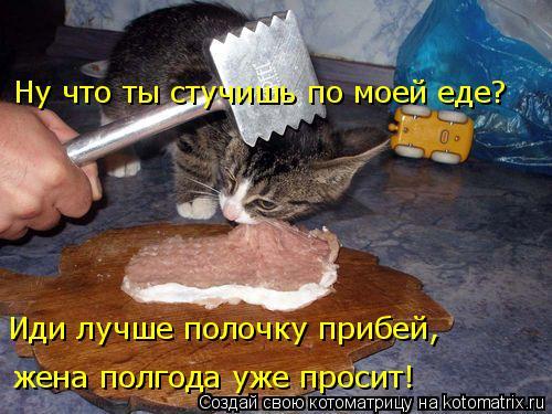 Котоматрица: жена полгода уже просит! Иди лучше полочку прибей,  Ну что ты стучишь по моей еде?
