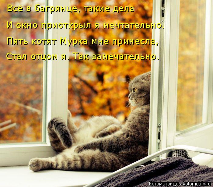 Котоматрица: Всё в багрянце, такие дела И окно приоткрыл я мечтательно. Пять котят Мурка мне принесла, Стал отцом я. Так замечательно.