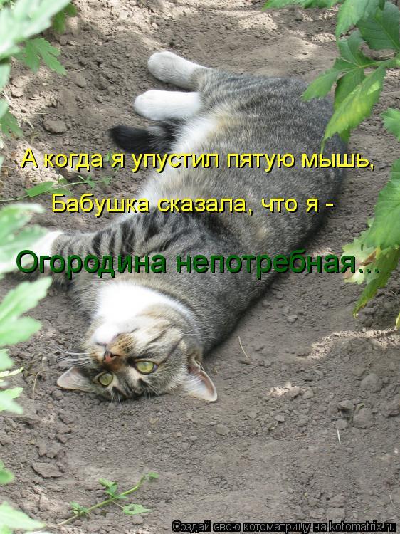 Котоматрица: А когда я упустил пятую мышь, Бабушка сказала, что я -  Огородина непотребная...