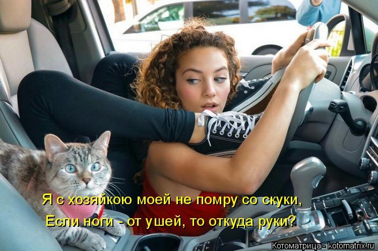 Котоматрица: Я с хозяйкою моей не помру со скуки, Если ноги - от ушей, то откуда руки?
