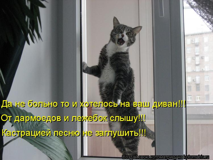 Котоматрица: Да не больно то и хотелось на ваш диван!!! От дармоедов и лежебок слышу!!! Кастрацией песню не заглушить!!!