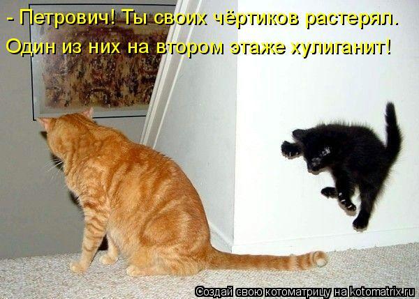 Котоматрица: - Петрович! Ты своих чёртиков растерял.  Один из них на втором этаже хулиганит!