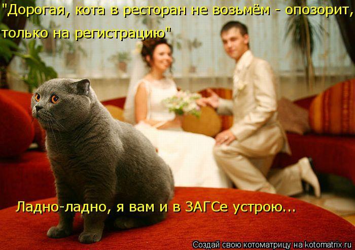 """Котоматрица: """"Дорогая, кота в ресторан не возьмём - опозорит,  только на регистрацию"""" Ладно-ладно, я вам и в ЗАГСе устрою..."""